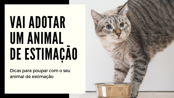 Dicas para poupar com os animais de estimação